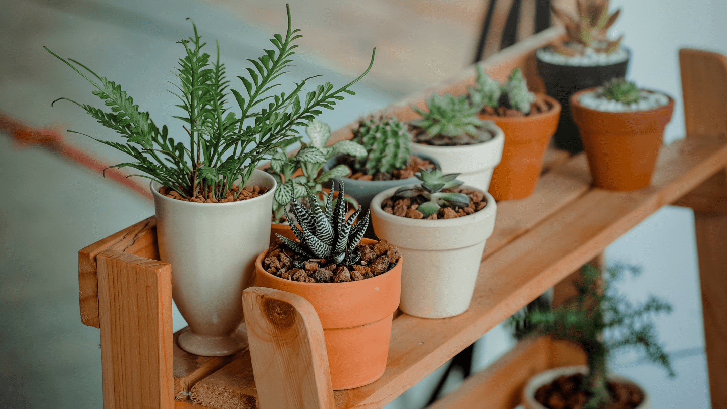 Image of succulents and other types of plants on a shelf. The image is for a blog post on how plants help mental health.